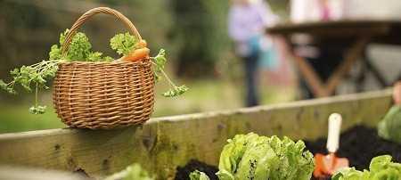 légumes du jardin les atouts du potager