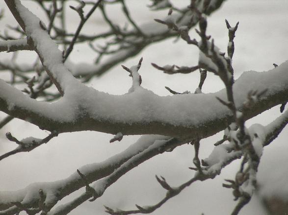 Branche d'arbre enneigé