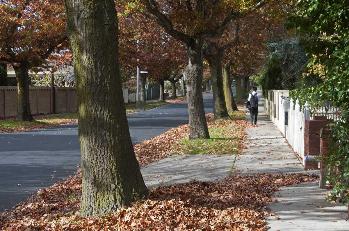 Route bordée d'arbre en automne