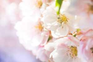 Changer de déco au printemps sans se ruiner