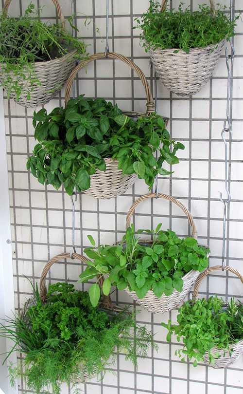 Comment cr er facilement un jardin vertical athome - Comment faire un jardin vertical ...